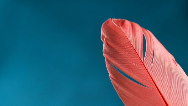feather-wallpaper8-600x338