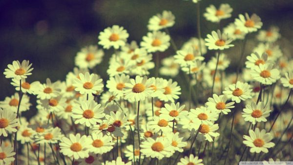 floral-wallpaper-tumblr3-600x338