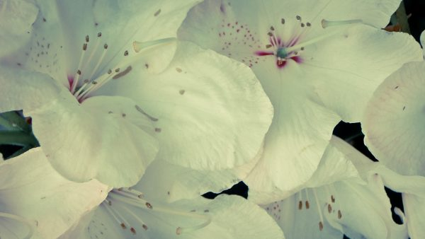 floral-wallpaper-tumblr6-600x338