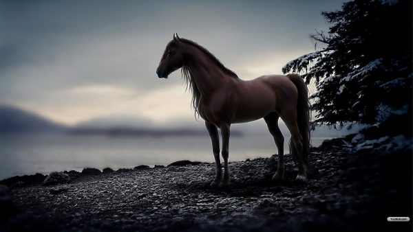 horse wallpapers2