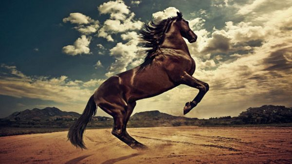 horse wallpapers5