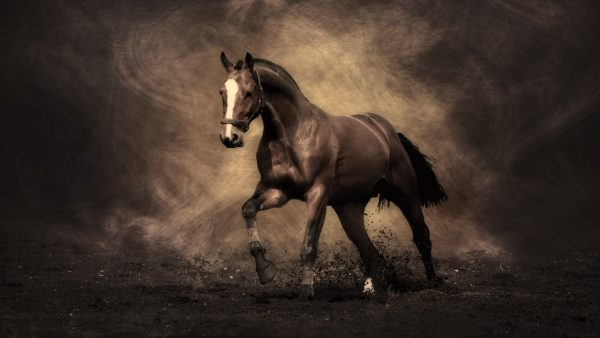 horse wallpapers9