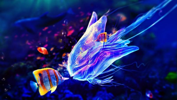 jellyfish wallpaper HD4