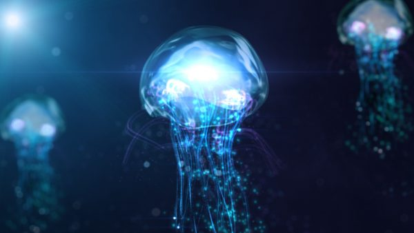 jellyfish-wallpaper9-600x338