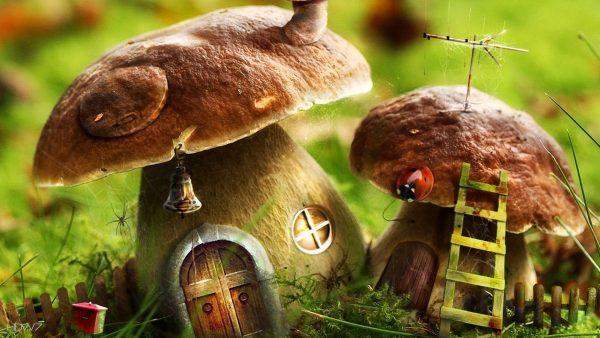 mushroom-wallpaper-HD1-600x338