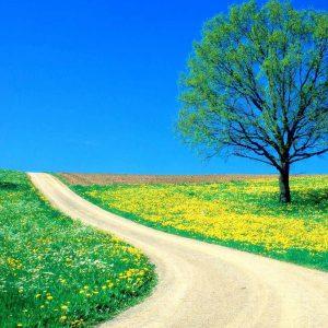nature-desktop-wallpaper-HD7-300x300