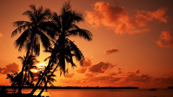 palm-trees-wallpaper2-600x338