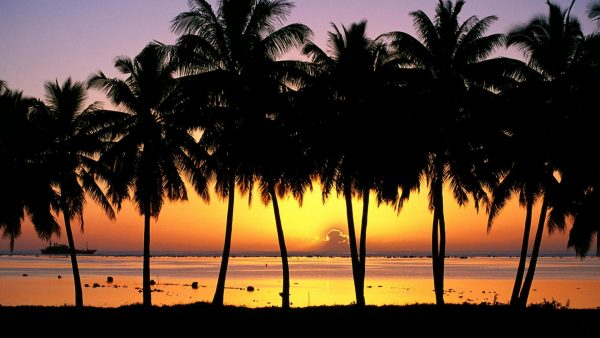 palm-trees-wallpaper7-600x338
