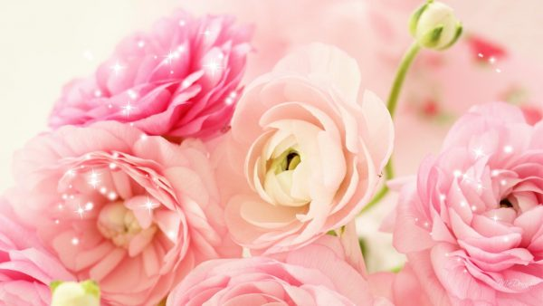 peonies wallpaper HD1