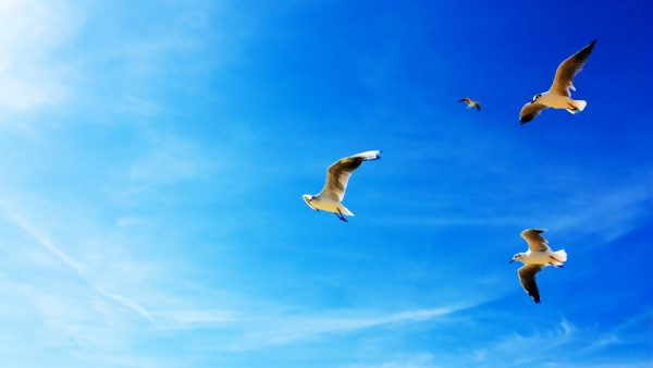 sky-blue-wallpaper-HD9-600x338