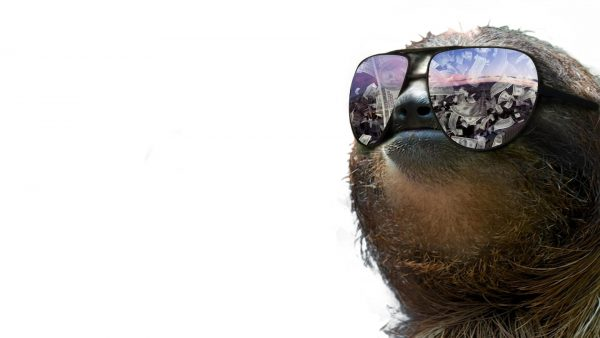 sloth-wallpaper4-600x338