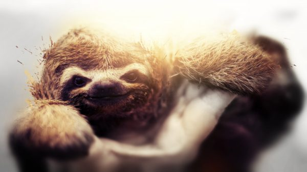 sloth-wallpaper7-600x338