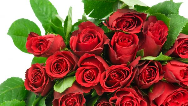 wallpaper-roses-HD4-600x338