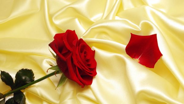 wallpaper-roses-HD9-600x338