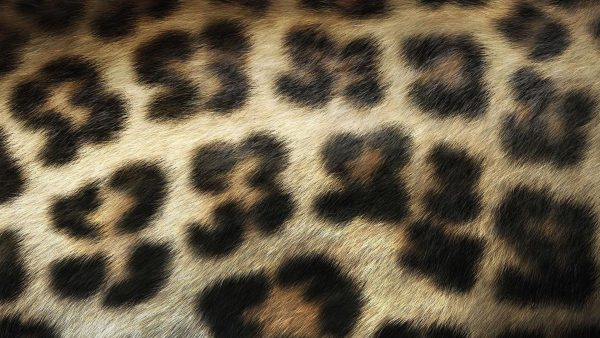 animal-print-wallpapers-HD1-600x338