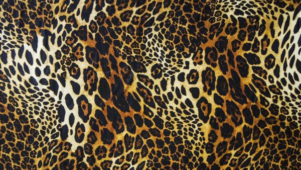 animal-print-wallpapers-HD3-600x338