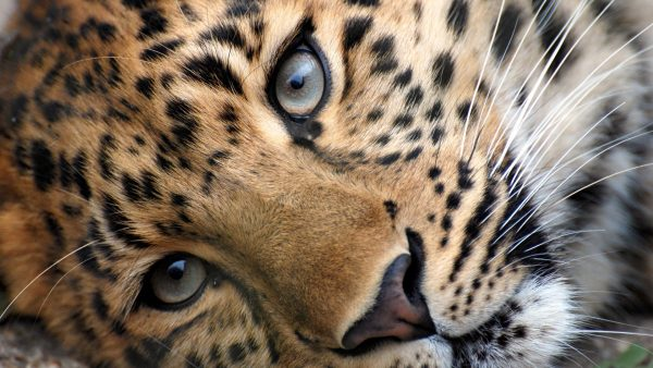 animal-print-wallpapers-HD4-600x338