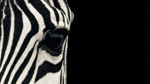 animal print wallpapers HD
