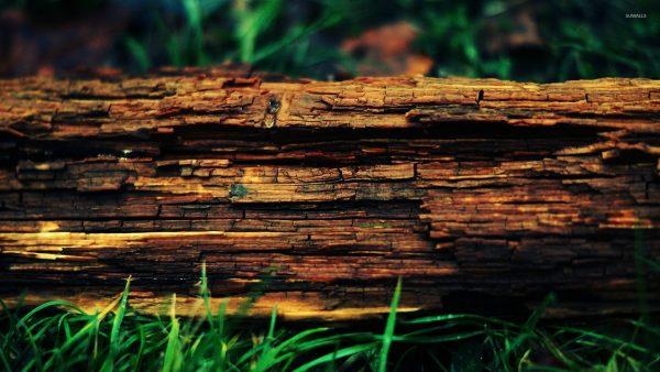 birch-bark-wallpaper-HD10-600x338