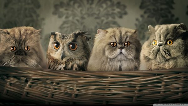 cartoon-owl-wallpaper-HD8-600x338