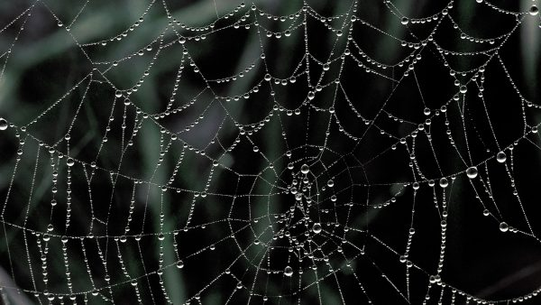 spider-web-wallpaper-HD1-600x338