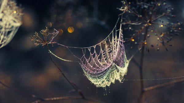 spider-web-wallpaper-HD10-600x338