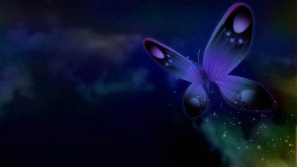butterfly-live-wallpaper10-600x338