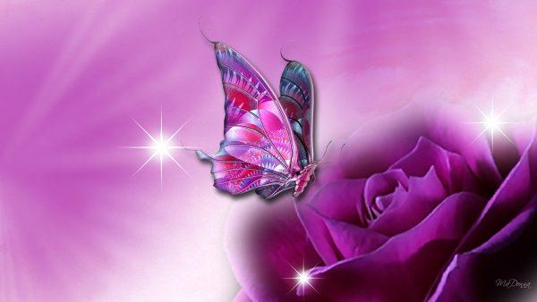 butterfly-live-wallpaper2-600x338