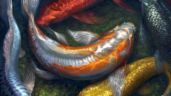 koi-free-live-wallpaper9-600x338