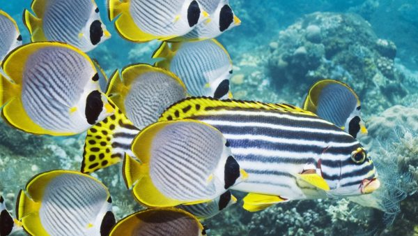 reef sea fish fishes koi live wallpaper free download for windows 7