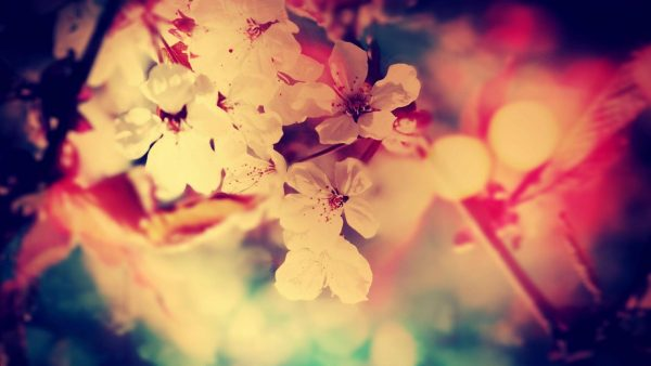vintage-flower-wallpaper-2-600x338