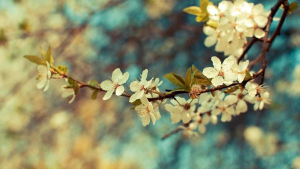 vintage-flower-wallpaper1-600x338