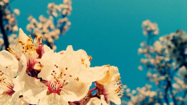 vintage-flower-wallpaper4-600x338