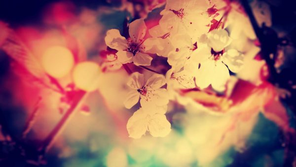 vintage-flower-wallpaper8-600x338