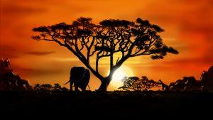 fond d'écran africain