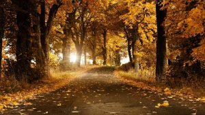 herfst hd wallpaper