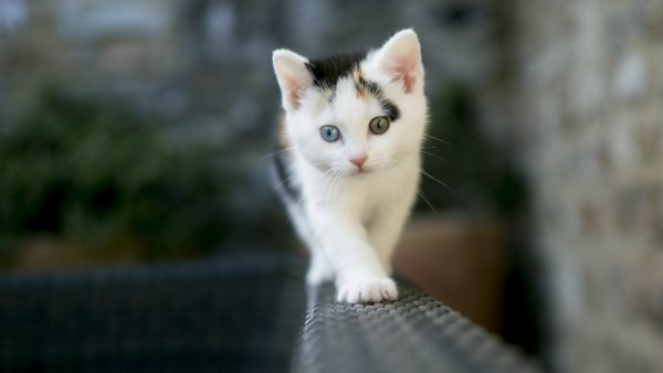 cat-wallpaper-for-walls6-600x338
