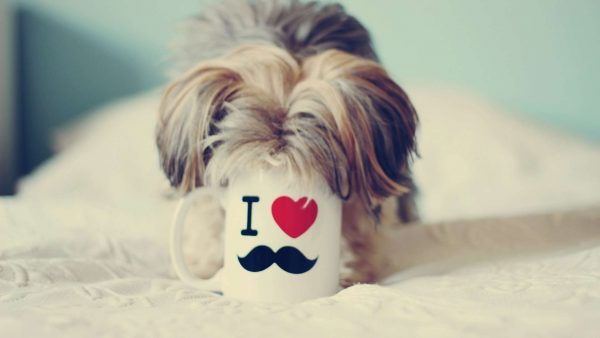 cute-mustache-wallpaper9-600x338