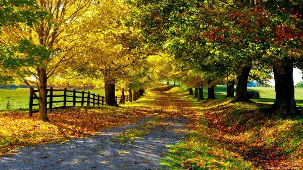 fall-season-wallpapers10-600x338