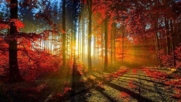fall-season-wallpapers6-600x338