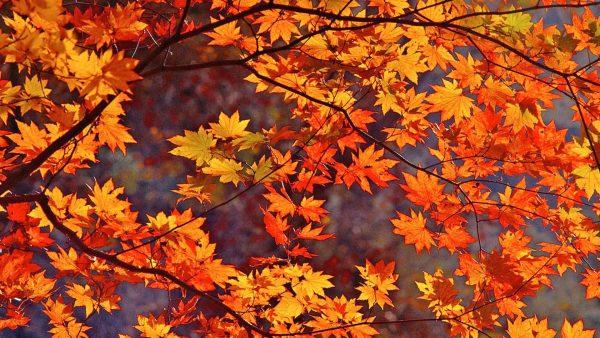 fall-season-wallpapers8-600x338