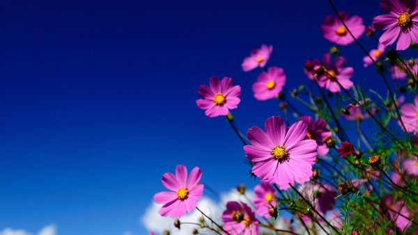 flowered-wallpaper2-600x338