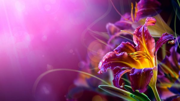 flowered-wallpaper3-600x338