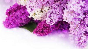 bunga ungu kertas dinding