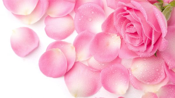 roses-wallpaper-tumblr6-600x338