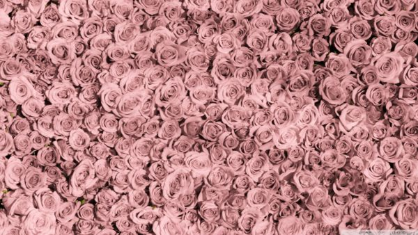roses-wallpaper-tumblr7-600x338