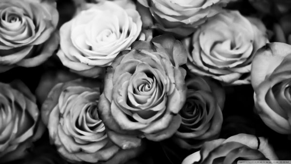 roses-wallpaper-tumblr9-600x338