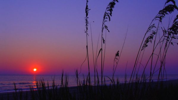 south-carolina-wallpaper2-600x338