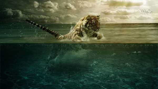 tiger-wallpaper-hd5-600x338