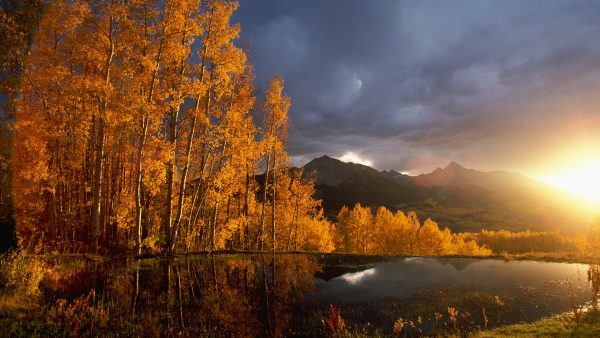 wallpaper-fall8-600x338